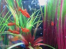 Любимые домашние питомцы, экзотические рыбки, коллекция аквариумов 2.flv